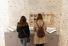 Besucher betrachten die Sammlung Gerning