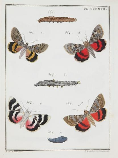 Illustration mit Zeichnungen von Raumen und Schmetterlingen